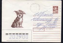 Sowjetunion 1988  Umschlag/ Entire Cover  Gebr./ Used  Hund  16.08.88
