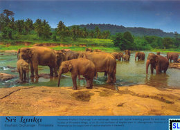 Sri Lanka Postcards, Yala National Park, Elephant, Buttala, Postcard - Sri Lanka (Ceylon)