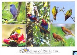 Sri Lanka Postcards, Birds, Postcard - Sri Lanka (Ceylon)