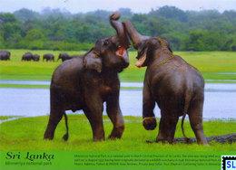 Sri Lanka Postcards, Traditional Lunch, Foods, Postcard - Sri Lanka (Ceylon)