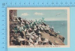 Percé Quebec - Oiseaux Sur L'ile Bonaventure  Par W. Duval, Vintage Ancienne    - 2 Scans - Oiseaux