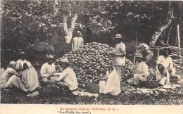 THEME CACAO / COCOA - TRINIDAD - Gathering Cocoa - Trinidad