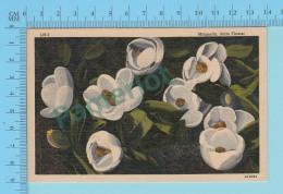 Flower Fleur  - Magnolia Louisiana State Flower  - Linnen Postcard Lin -  Vintage Ancienne - 2 Scans - Fleurs