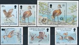 Cayman Islands  Vogels