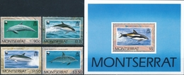 Montserrat  Dolfijnen