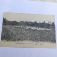 13 - MARIGNANE - Bord De L'Etang (Lou Poncet) En 1915 - Marignane