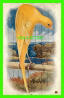 "OISEAUX - THE SCOTCH FANCY CANARY -  PUB. BY ""CAGE BIRDS"" - SERIES No 11 - - Oiseaux"