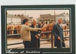 CPM 49 CANDE ... Maquignons Sur Le Foirail (Livenais CO/030) Marché Aux Vaches - Autres Communes