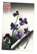 A Quando - Pensées Violettes - (48) - Fleurs