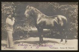 Hungarian Famous NONIUS VII Race Horse Old RPPC 1925 - Chevaux