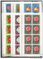 12x KHOR FAKKAN - Plants - Flowers - Roses - CTO