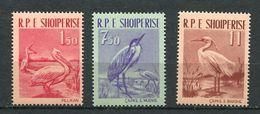 193 ALBANIE 1961 - Yvert 552/54 - Oiseau Echassier Pelican ... -  Neuf ** (MNH) Sans Trace De Charniere - Albania