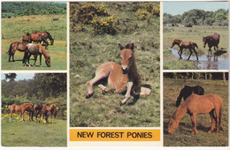 Postcard - New Forest Ponies - Five Views Very Good - Postcards