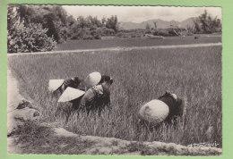 Cochinchine : Paysannes Dans La Rizière. 2 Scans. Edition Boy Landry à Saïgon. Format CPM - Vietnam