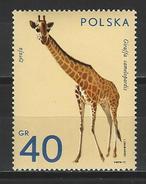 Polen Mi 2163 ** MNH Giraffa Camelopardalis
