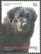 MACEDONIA 2011 Pets - Macedonian Shepherd Dog - Karaman MNH - Macédoine