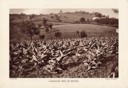HAUTE-VIENNE, CAMPAGNE PRES DE BEYNAC, Planche Densité = 200g, Format 20 X 29 Cm, (A. Demangeon) - Géographie