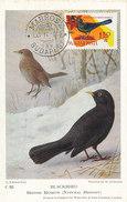 D29045 CARTE MAXIMUM CARD 1962 HUNGARY - BLACKBIRD TURDUS MERULA CP MUSEUM