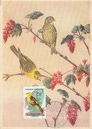 D29046 CARTE MAXIMUM CARD 1962 HUNGARY - EMBERIZA BRUANT JAUNE CP ORIGINAL