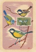 D29047 CARTE MAXIMUM CARD 1960 BULGARIA - PARUS MAJOR MESANGE CP ORIGINAL