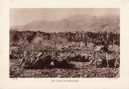 UNE VIGNE EN MONTAGNE, Planche Densité = 200g, Format 20 X 29 Cm, (D. Faucher) - Géographie