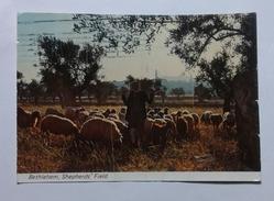 BETLEMME - VEDUTA DAL CAMPO DEI PASTORI  (6321) - Palestina