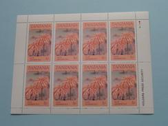 ALOE GRAMINICOLA ( Zie/voir Foto´s Voor/pour Détails ) !! - Tanzanie (1964-...)