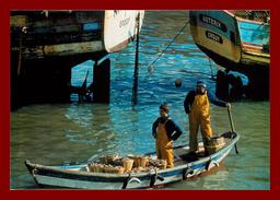 Thème Métiers, Tirage à 60 Ex, édition Josan,après La Marée, Débarquement Pêche Coquilles St Jacques Scan Recto Verso - Métiers