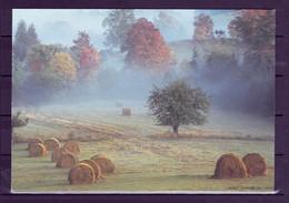 SUEDE  : ENTIER AGRICULTURE / FARMING / LANDWIRTSCHAFT /  FOIN / HAY / HEU