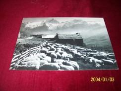 MOUTONS  °° BERNARD GRANGE  74450 VALLOIRE  LE 28 05 1988 - Animals