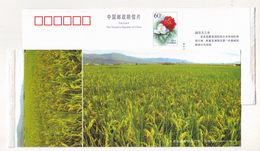 Rice Field In Yiliang Farm,China 2004 Yiliang Landscape Advertising Pre-stamped Card