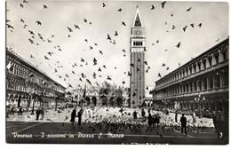 VENEZIA I Piccioni In Piazza S. Marco - Venezia (Venedig)