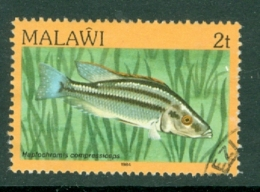 Malawi: 1984   Fishes   SG689    2t    Used