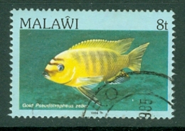 Malawi: 1984   Fishes   SG692    8t    Used