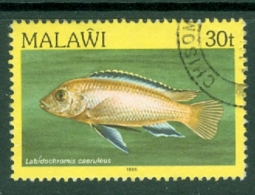 Malawi: 1984   Fishes   SG696    30t    Used - Malawi (1964-...)