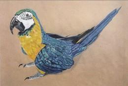 Maxicards  Cheeky Bird 2015