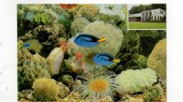 Postcard - Blue Surgeon At Van Kleef Aquarium - Singapore New - Ohne Zuordnung