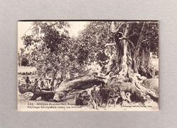 AK Senegal Paysage Diolas 30.10.1921 Secondee Goldcoast Foto Fortier - Sénégal