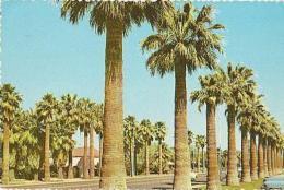 USA        H198        PHOENIX.Palm-Lined Central Avenue Adjacent To Phoenix Public-Library - Phoenix