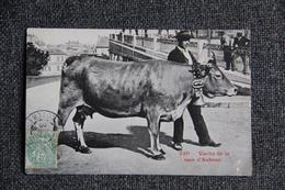 Vache De La Race AUBRAC - Vaches