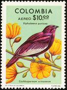 Colombie. Colombia. 1977 Pompadour Cotinga    Xipholena Punicea