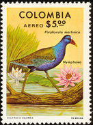 Colombie. Colombia. 1977  Purple Gallinule    Porphyrio Martinica