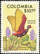 Colombie. Colombia. 1977   Wattled Jacana    Jacana Jacana