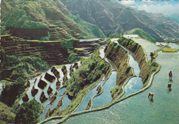 G , Cp , PHILIPPINES , Another Philippine Wonder , The Famous Rice Terraces Of The Mountain Province - Philippines