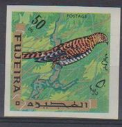 Fujeira. 1969. Common Cuckoo    Cuculus Canorus