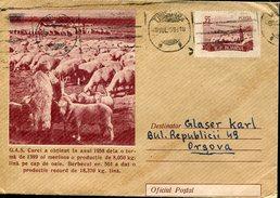 18671 Romania, Stationery Cover 55b. 1959 Circuled, Showing Merino Sheep, Moutons Merinos,flock Of Sheeps