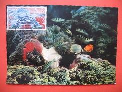Papeete PA  YT N°14 CARTE MAXIMUM 50f. CARD PREMIER JOUR PAPEETE 1 /9/1965 Championnat Du Monde De Chasse Sous Marine - Cartes-maximum