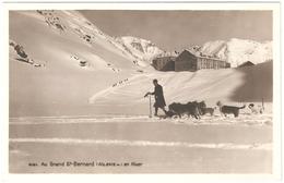 Grand-Saint-Bernard - Au Grand St-Bernard En Hiver - Carte Photo Edit. D'Art R. E. Chapallaz - état Neuf - Chiens - VS Valais