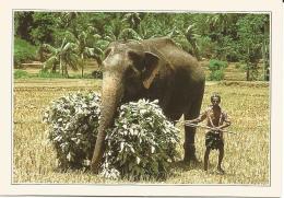 Carte Façon CPM Avec Légende Au Dos   Sri Lanka   Eléphant Et Son Cornac - Autres