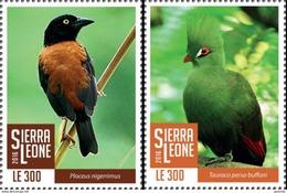 Sierra Leone 2016, Animals, Birds, 2val